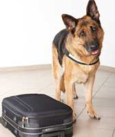 Dog standing in front of a suitcase.